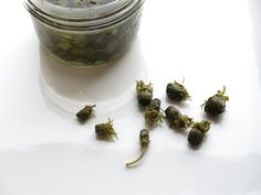 Chef Alan Bergo shares his recipe for fermented nasturtium capers Raw Food Recipes, Italian Recipes, Healthy Recipes, Healthy Food, Healthy Eating, Recipe Ratings, Canning Jars, How To Make Homemade, Small Gardens