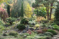 conifer garden | 1009259.jpg