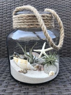 Luft Pflanzen DIY Ideen In Best Plants DIY Ideas And Inspiration For You The post Beste 70 + Air Plants DIY Ideen und Inspiration für Sie appeared first on Home Dekoration. Seashell Crafts, Beach Crafts, Diy And Crafts, Seashell Projects, Seashell Art, Crafts With Seashells, Seashell Wind Chimes, Beach Themed Crafts, Ocean Crafts