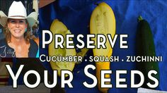 Learn how to save your zucchini, cucumbers and squash seeds. In this video I show you how to save cucumber, squash and zucchini seeds, how many days do zucch. Garden Seeds, Planting Seeds, Organic Vegetable Seeds, Vegetable Gardening, Saving Seeds From Vegetables, Zucchini, Squash Seeds, Cucumber Seeds, Water Pond