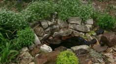 TSG: Backyard Biodiversity For Beginners Part 3 - Water