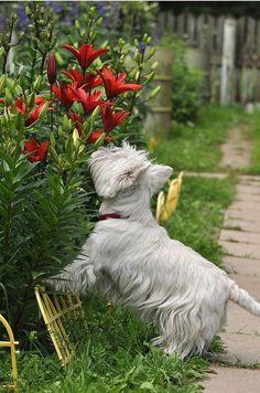 Prenez le temps de sentir une fleur