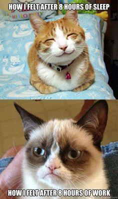 From Happy Cat to Grumpy Cat...