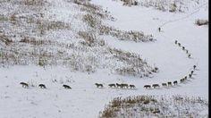 Fotografia dintr-un parc natural din România care face furori pe rețelele de socializare | Agenţia AMOS News