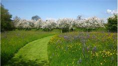 Yeo Valley Garden, NGS Gardens open for charity - garden