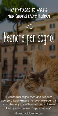 Italian Phrases - A fun addition to an Italy unit as a homeschool resource! #italianlessons