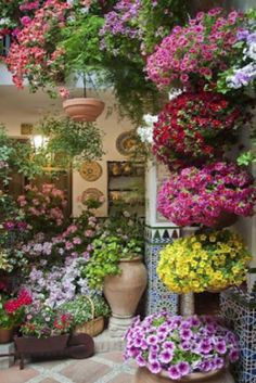 Top 10 Flowers For Balcony Garden (VIDEO)  #Garden #Flowers #Balcony #Amazing