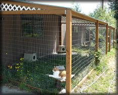 Outdoor Pvc Cat Enclosure Pets Pinterest Pigeon