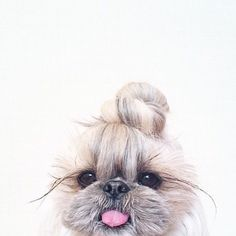 We are loving the half up top knot daily trend. Xo Tali. #doglovers #topknot #halfup