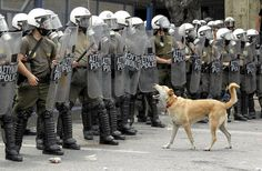 Riot dog in Greece