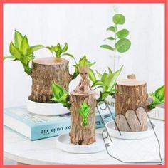 Hydroponic Plants, Hydroponics, Brazil Wood, Water Flood, Design Jardin, Paypal Credit Card, Wood Source, Christmas Mom, Christmas Ideas