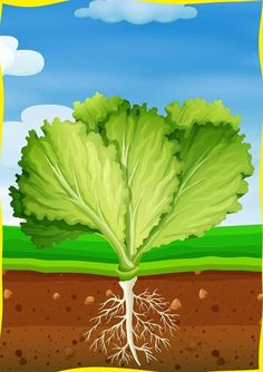 Stories For Kids, Fruits And Vegetables, Games For Kids, Montessori, Flora, Kindergarten, Homeschool, Clip Art, Learning