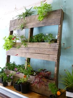 Re-use-everything, right?!  If you just keep your eyes peeled, you'll start to notice discarded palettes all over town!  These sturdy structures are perfect for making vertical planters.  Sarah re-purposed this one with just a little elbow grease and some creativity.