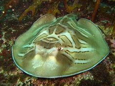 Unique Marine Animals
