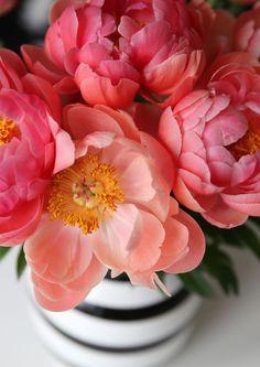 Hvordan komme i gang med feng shui - Friske blomster #fengshui #flowers #peonies