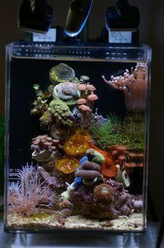 Posted Image Saltwater Tank, Saltwater Aquarium, Freshwater Aquarium, Aquarium Fish, Fish Aquariums, Coral Reef Aquarium, Marine Aquarium, Reef Aquascaping, Home Aquarium