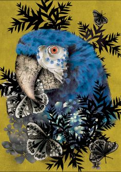 Sarah Arnett Print Mr.Parrot 50 x 70cm: on Bamboo