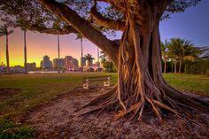 What A Beautiful Banyan Tree by @floridapicture #miami #florida #miamibeach #sobe #southbeach #brickell #Miami