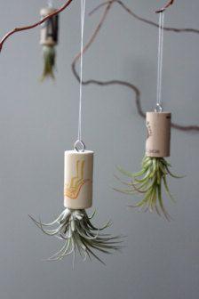 Plants & Terrariums in Gardener & Naturalist - Etsy Gift Ideas