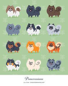 POMERANIANS art print by doggiedrawings on Etsy
