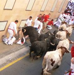 Image gallery of the 2006 San Fermin bull run in Pamplona, Spain. Pamplona Spain, Running Of The Bulls, Before I Die, Canary Islands, Travel Tips, Animals, Places, Antique Photos, Animales