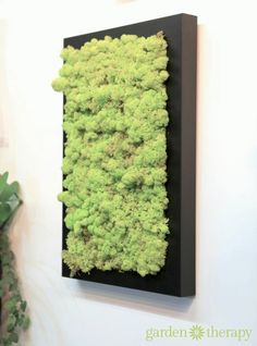 Bring Some Green Into Your Home with Moss Art