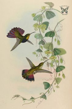 1000+ images about 19th Century Birds with Plant ...  1000+ images ab...