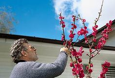 "Think #pruning is only for winter? To ""dwarf"" the development of a tree or branch, pruning should be done soon after seasonal growth is complete. #summer #gardening"