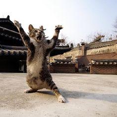 """Kung-fu """"cat""""?"""