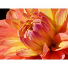 Orange Flower ❤ liked on Polyvore featuring backgrounds and filler