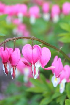Great list of plants that thrive in a shaded garden