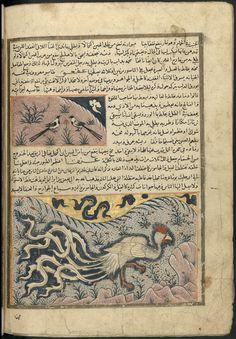 Adjâ'ib al-makhlûqât wa gharâ'ib al mawdjûdât, by Zakariyyā ibn Muḥammad ibn Maḥmūd al Qazwīnī, (ca.1203-1283), Ms 1130 Bordeau, f164