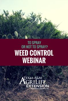 Learn about Weed Control on Texas Rangelands