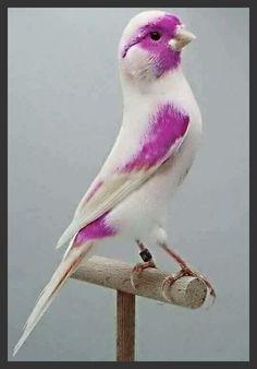 15 Colorful Birds to Inspire Your Next Project - Pencil Shavings Studio Funny Birds, Cute Birds, Pretty Birds, Beautiful Birds, Animals Beautiful, Cute Animals, Beautiful Things, Exotic Birds, Colorful Birds