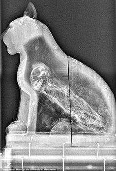 70 million animals mummified in ancient Egypt New research shows that mummified animals became a huge industry - with a staggering 70 million animals embalmed to be buried with their owners as a sacrifice to the gods. Ancient Aliens, Cats In Ancient Egypt, Ancient Egyptian Art, Ancient History, Egypt Mummy, Pregnant Cat, Egypt News, Egyptian Mummies, Weird World