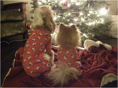 Fidose of Reality Holi-Dog Photo Contest