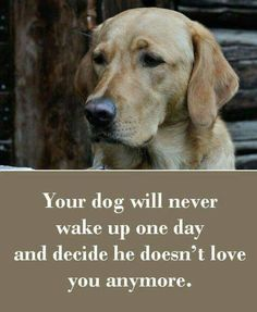 42 Dog Sayings Which Will Touch Your Heart - Funny Dog Quotes - Your dog will never wake up one day and decide he doesnt love you anymore. The post 42 Dog Sayings Which Will Touch Your Heart appeared first on Gag Dad. Love My Dog, Puppy Love, Dog Quotes Love, Dog Sayings, Dog Loyalty Quotes, Quotes About Dogs, Rescue Dog Quotes, Best Dog Quotes, Animals And Pets