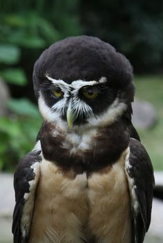 165 Best Hawks,Eagles,and Owls images | Pet birds ...