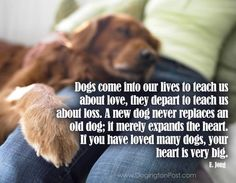 ''Dogs come into our lives to teach us about love, they depart to teach us about loss. A new dog never replaces an old dog; it merely expands the heart. If you have loved many dogs, your heart is very big.'' -- E. Jong ; source: Dogington Post