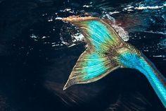 Green blue mermaid tail unferwatebb