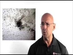 Toxic Black Mold Removal | 251.732.2062 | Baldwin and Mobile County
