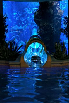 "FAILURE.  The tank was so dark going through I couldn't see a thing! Such a bummer!  ""Shark Tank Water Slide at the Golden Nugget in Las Vegas"""