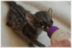 baby genet <3 How many times will I ever get to see one of these?
