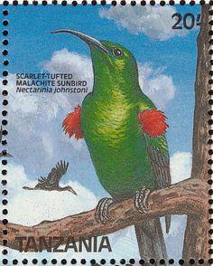Scarlet tufted Malachite sunbird (Nectarinia Johnstoni). Stamp from Tanzania, circa 1989