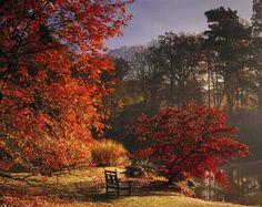 El otoño es una de las mejores estaciones para disfrutar de la Naturaleza. Una buena manera de conocer estos cambios en el paisaje británico es a través de los llamados Great British Walk que recorren algunos de los parajes y parques más bellos de Reino Unido.