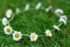 Daisy chain on grass. I used to make those all the time in Germany when I was li. Daisy chain on g Daisy Chain Tattoo, Time In Germany, Plant Pictures, My Childhood Memories, My Memory, The Good Old Days, Flower Crown, Grass, Plants