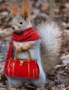 Old Lady Squirrel - SunnyLOL