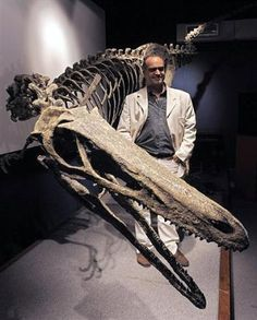 Austroraptor Fossil