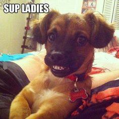 Sup ladies  http://funphotololz.com/funny/sup-ladies/