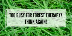 Learn great and easy tips how you can fit forest therapy in your life without neglecting your family, work or good night's sleep.